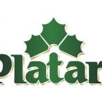 Piwo Platan 11° puszka