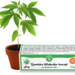 Nasiona konopi leczniczych CBD 10% – 3 sztuk